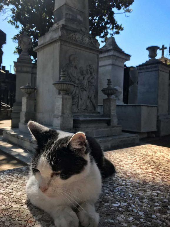 One of the many feline occupants of Recoleta Cemetery