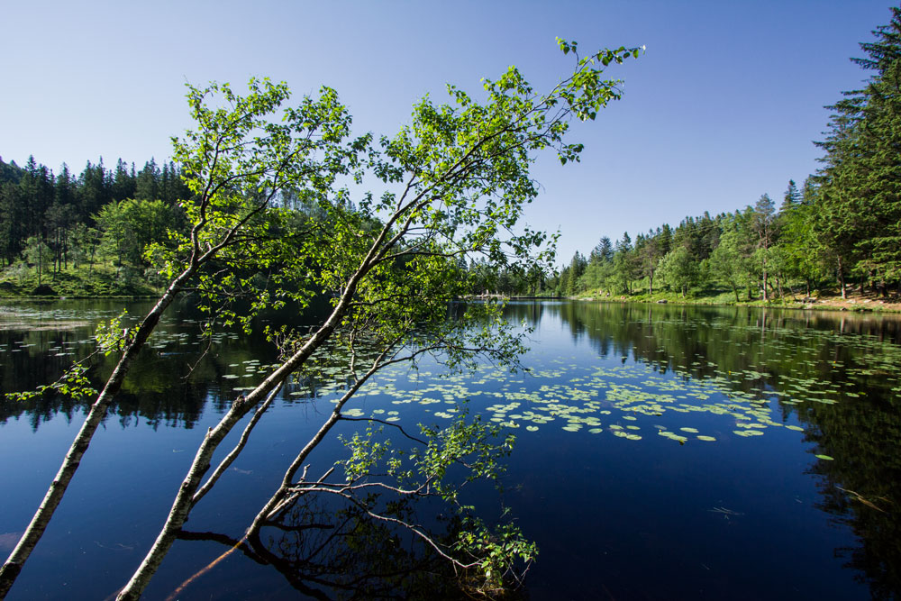 greenery reflected in deep blue water of lake