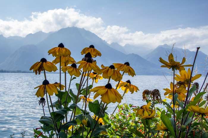 Chemin Fleuri, Montreux