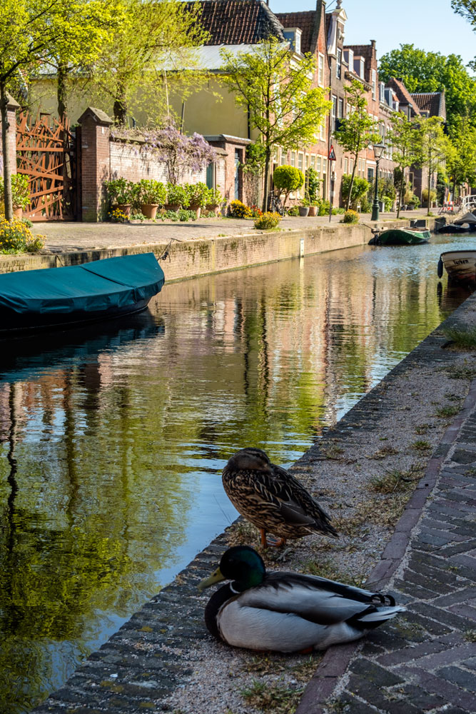 two docks at the side of a canal in leiden netherlands