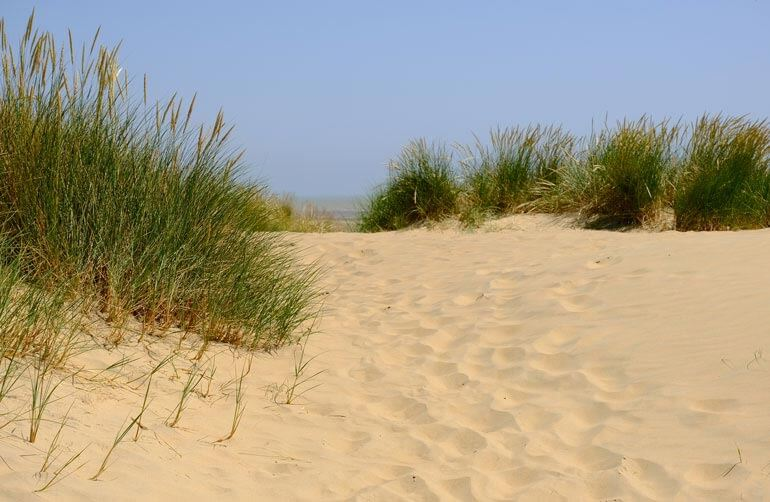 Dunes at Camber Sands