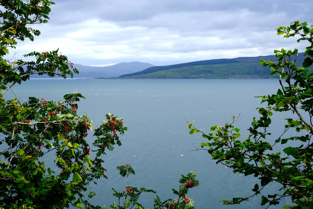 mull scotland sea and rowan berries