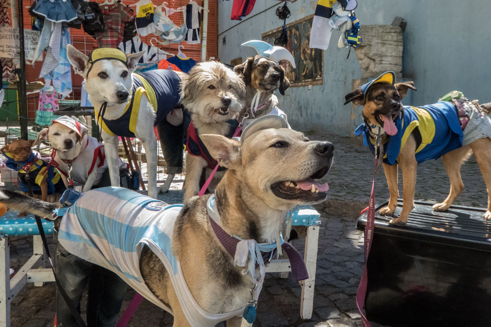 dogs-dressed-as-footballers-in-la-boca-buenos-aires