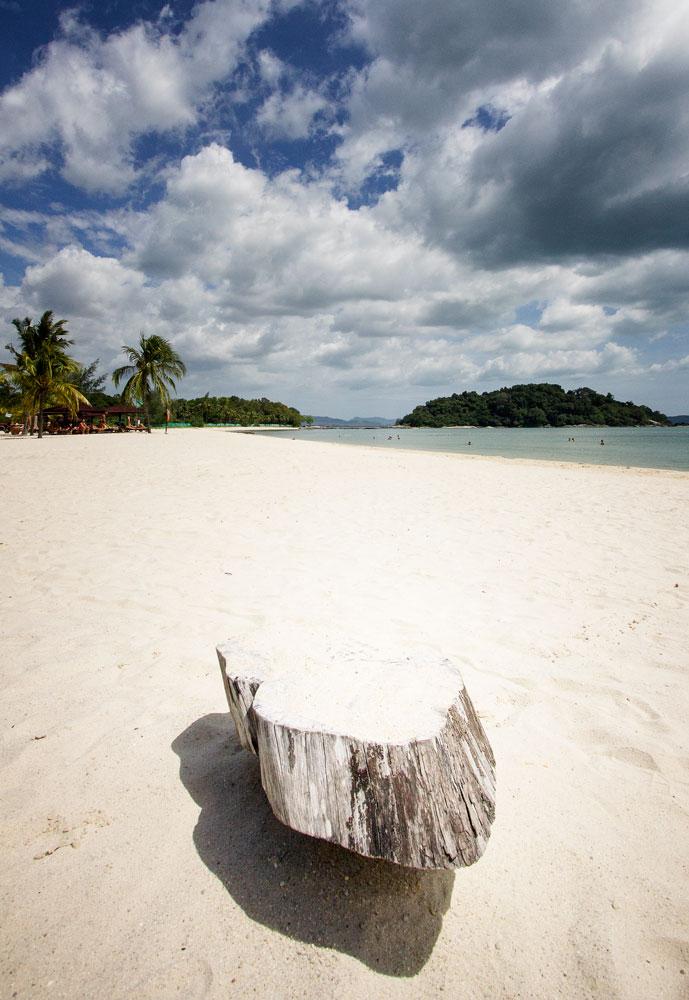 tree stump on white sand beach