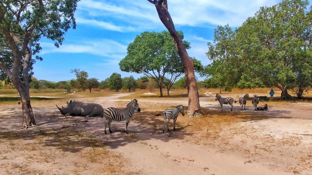 group-of-zebra-in-senegal-which-in-one-of-the-best-places-to-travel-alone-in-africa