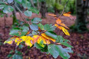 autumn leaves seen on one of the epping forest walks