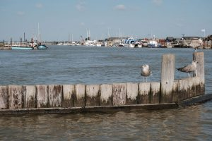 seagulls on breakwater in southwold harbour which is one of the best reasons to visit walberswick suffolk