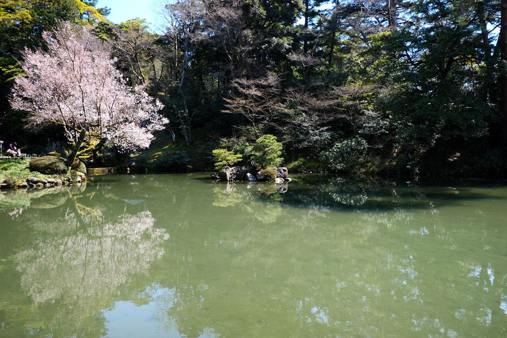 reflection of blosson tree in aqua green water of pond at kenroku-en-garden kanazawa