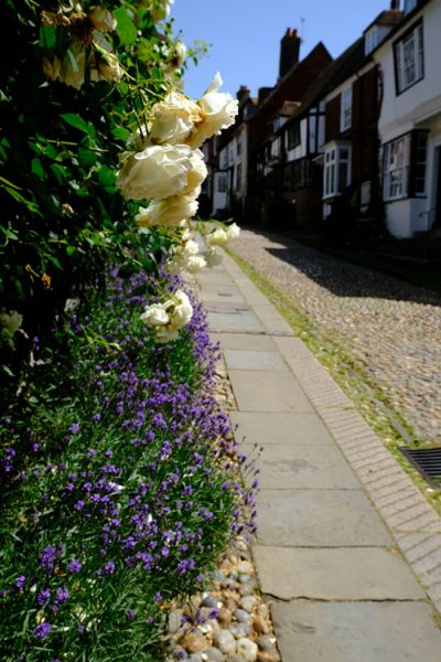 purple and cream flowers in front on buildings in street in rye