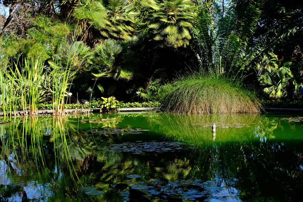 pond in garden with reflections of vegetation