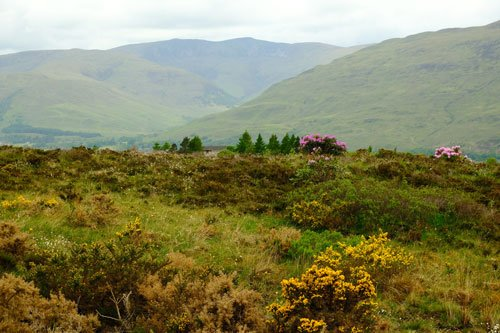 rolling scottish countryside with gorse and shrubs