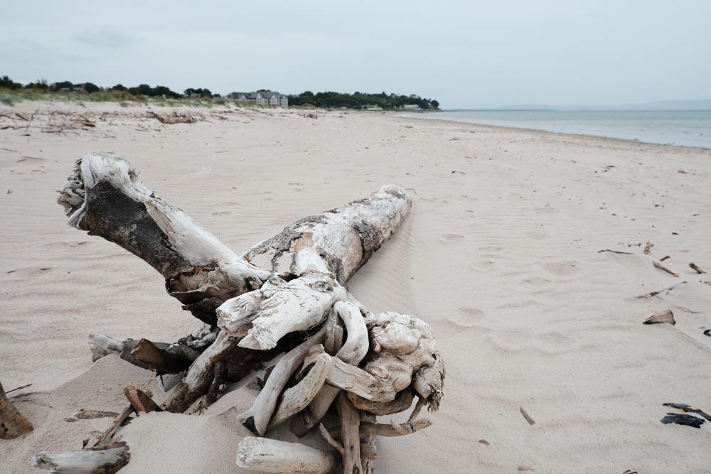 larhs piece of driftwood on a sandy beach