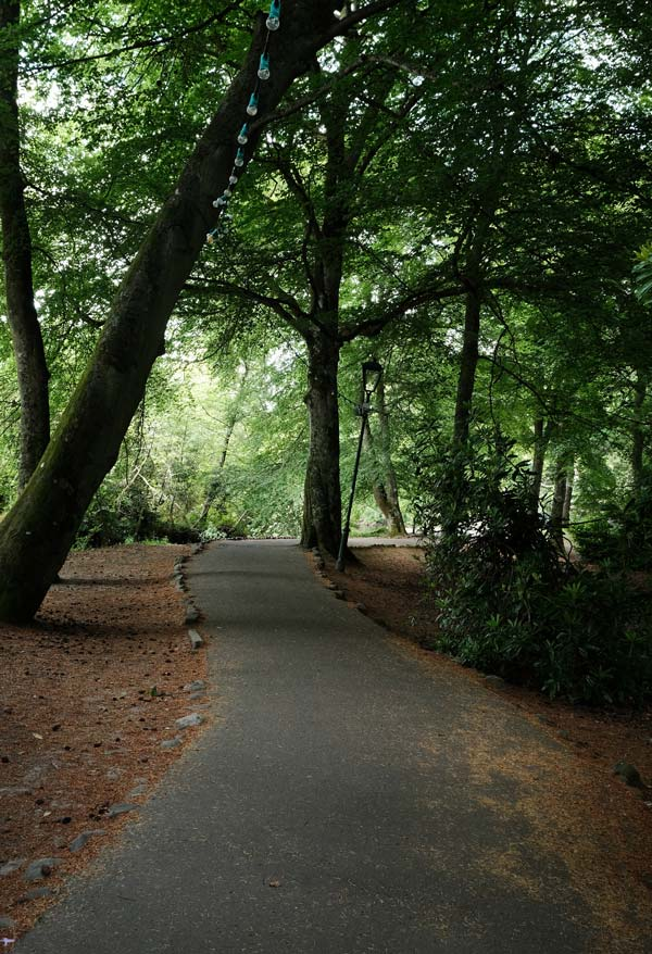 path through woodland in ness islands which is one of the best things to do in inverness scotland