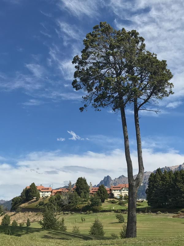 tall tree in front of low rise chalet type hotel