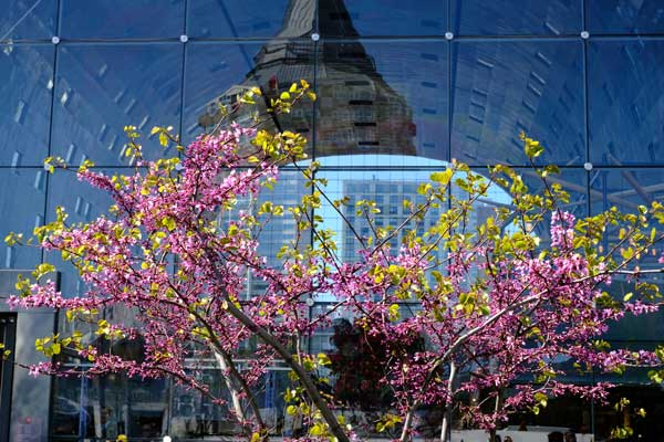blossoms in front of large glass window with reflections