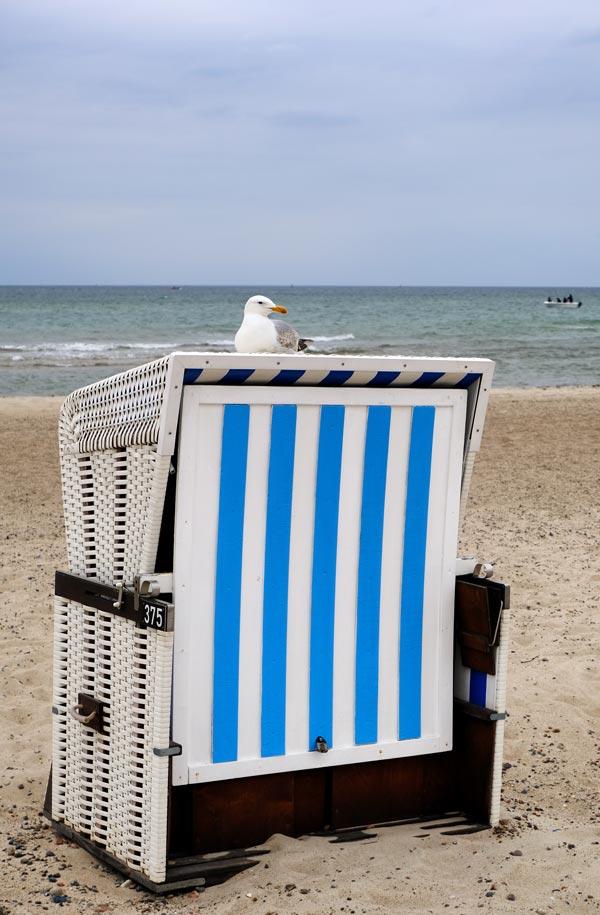 seagull perched on Deckchair on Warnemünde beach