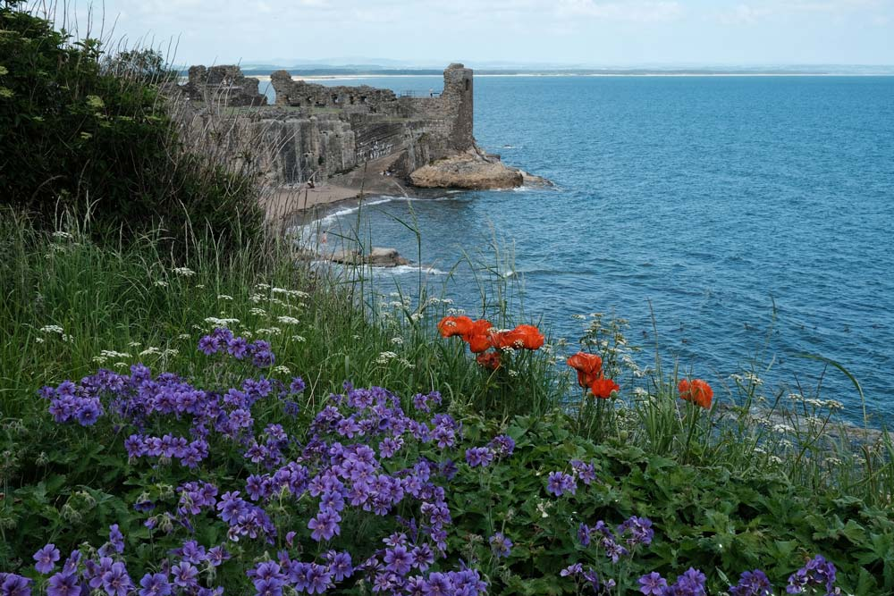 purple and red flowers with ruined castle and sea
