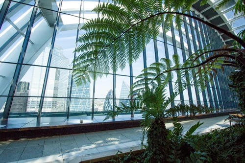 indoor giant palm fronds framing large window with view of the city of london