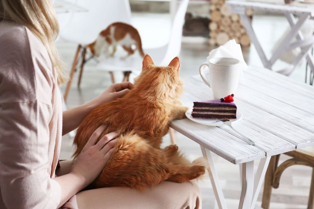 woman stroking a cat in a cafe