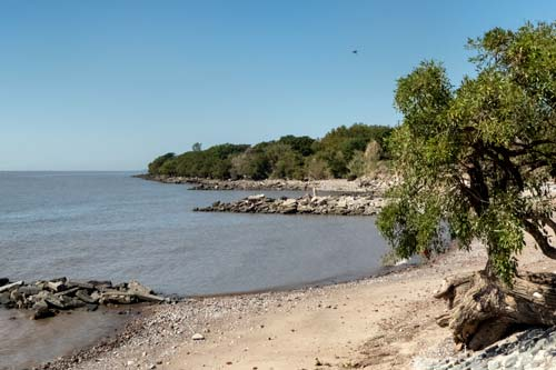 sand and stone beach with tree